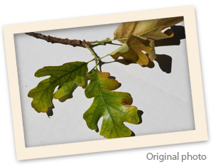 Original-photo-of-leaves