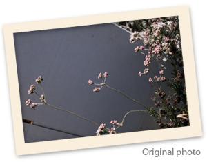 PinkWildslowersriginalphotofromasthead