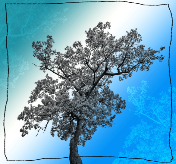 OaktreewithBluegreenbackground